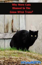 halloween cats why were cats blamed in the salem witch trials playful kitty