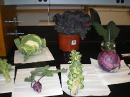 which food plant was native to the old world these common vegetables are actually all the same plant business