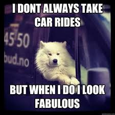 Dog In Car Meme - the answer my friend is blowing in the wind dogs face boxerz