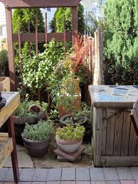 patio potted plants