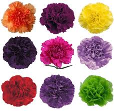 bulk carnations assorted tinted carnation