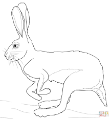 running desert hare coloring page free printable coloring pages