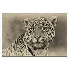 compare prices on cheetah artwork online shopping buy low price