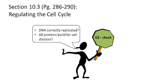 section 10 3 pg regulating the cell cycle ppt download