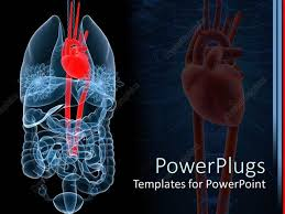 powerpoint design lungs powerpoint template x ray depiction of human anatomy with red heart