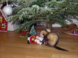 timeout the ferret loves xmas