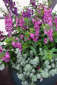 Outdoor Potted Plants Full Sun by Container Flower Ideas Hgtv
