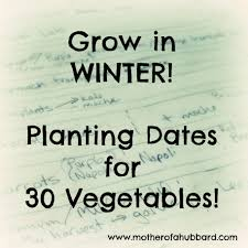 winter vegetable planting guide
