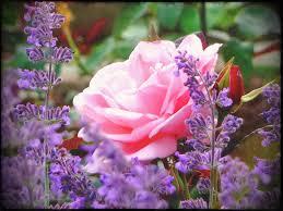 wallpaper za laptop cliserpudo beautiful flower garden wallpaper images creative