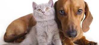 alimentazione casalinga gatto alimentazione casalinga per cani e gatti verde azzurro notizie