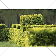 green ornamental foliage gl stock images
