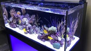 led aquarium lights for reef tanks led aquarium lights archives current usa