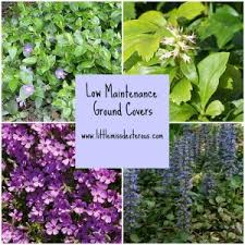 Low Maintenance Plants And Flowers - low maintenance ground cover plants