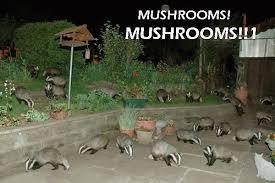 Badger Memes - image 3913 badger badger badger know your meme