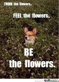 Meme Florist - 28 very funny flower meme images of all the time