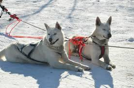 Sled Dog Adventures Fairbanks 2018 All You Need to Know Before