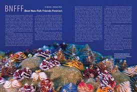 coral magazine new issue u201csymbiosis u201d inside look
