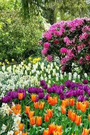 572 best flowers images on pinterest amazing flowers beautiful