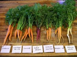 The Summer And Winter Garden - garden tips for late summer harvest daily and sow weekly for fall