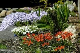 growing with plants rock gardening societies beyond rocks a