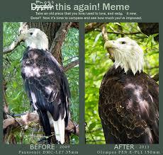 Photography Meme - photography bald eagle meme by mishkuu on deviantart