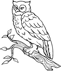 desert owl coloring page desert owl drawing clipartxtras