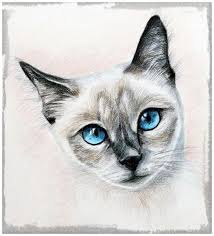 imagenes a lapiz de gatos lindas imagenes de gatos dibujados a lapiz dibujos de gatos