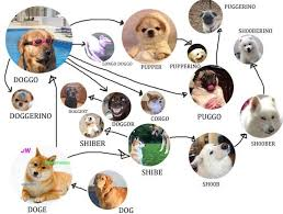 Know Your Meme Dog - doggo chart doggo know your meme