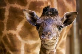 bored at home create your own zoo santa barbara zoo home facebook