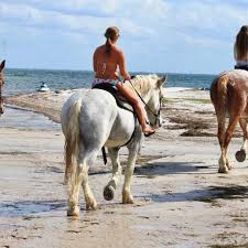St Petersburg Fl Beach House Rentals by Horseback Riding On The Beach Visit St Petersburg Clearwater Florida