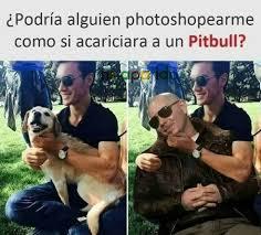 Pitbull Meme - c pitbull meme by serhiy kulyk memedroid