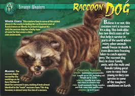 raccoon dog wierd n u0027wild creatures wiki fandom powered by wikia
