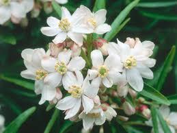madagascar native plants a white garden hgtv