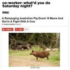 Australian Memes - literally just 100 fucking hilarious australian memes