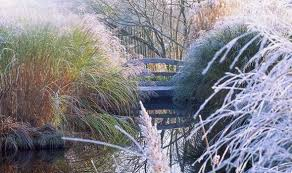 alan titchmarsh s tips for growing ornamental grasses in winter