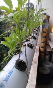 aquaponics and hydroponics pune maharashtra farmers business u0027s