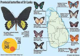 provinces get their own butterflies window to nature
