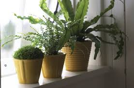 11 houseplants ideas that outsmart winter depression