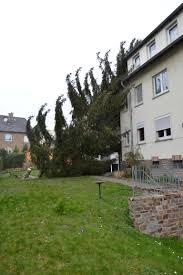 Haus Zu Baum Droht Auf Haus Zu Stürzen U2013 Feuerwehr Geisenheim