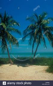 hammock hanging between two palm trees on white sandy beach in the