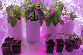 growing herbs indoors under lights seed starting selecting the best containers for your seedlings