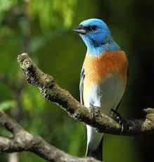 bird house u0026 habitat boise idaho 208 375 8051