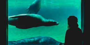 japanese aquarium aquarium forced to close due to lack of visitors