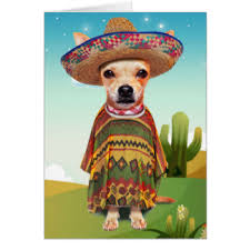 mexican chihuahua greeting cards zazzle