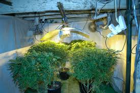 grow room pictures 8 steps to building the perfect indoor grow