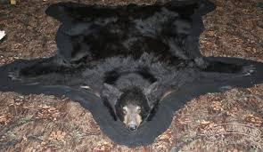 Taxidermy Bear Rug Dakota Head Hunters Taxidermy Gallery