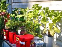 25 best container gardening images on pinterest gardens bottle