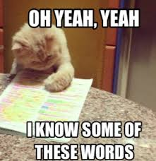 Good Luck Cat Meme - journey to college on twitter sat test day checklist good luck