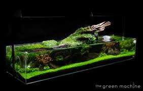 aquascaping layouts with stone and driftwood images the green machine