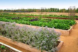 soho farmhouse kitchen garden garden pinterest soho
